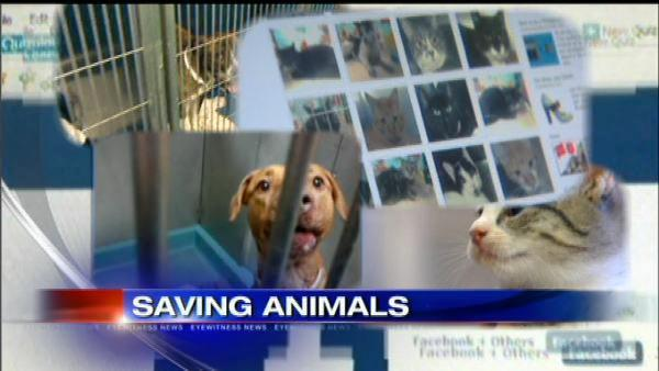 Facebook campaign to save shelter animals set to die