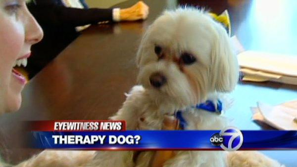 Dispute over singing dog therapy