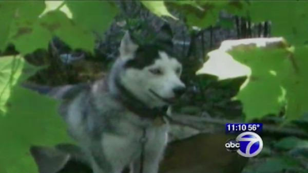 Dogs terrorizing residents in the Bronx