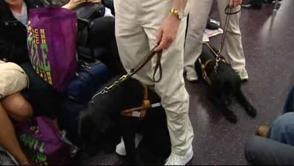 Subway Stories: Seeing Eye Dog through subway system