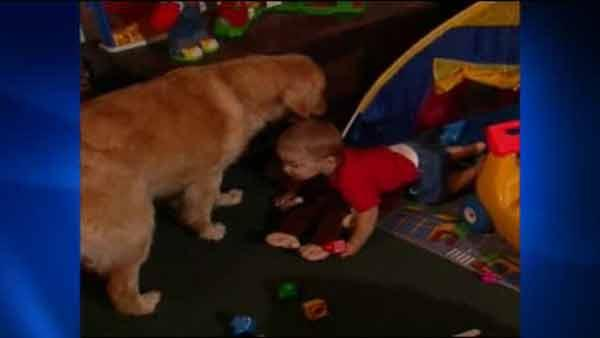 Living with a pet may prevent infants from getting pet allergies