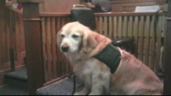 Service dog on the witness stand
