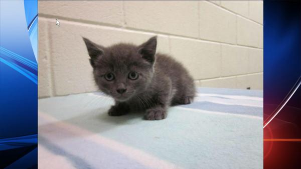 Kitten tossed from moving car onto bridge