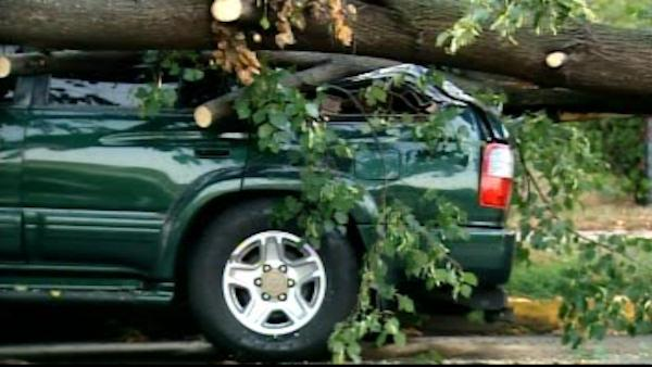 Ferocious rain storm downs trees in Linden