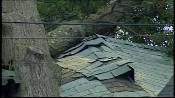 Tree house from Hurricane Irene remains