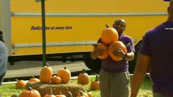 Special pumpkin delivery in Paterson