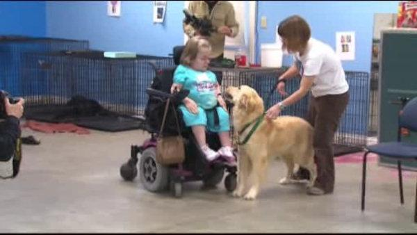 Service dogs help better the disabled's quality of life