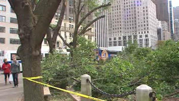 Central Park loses 1,000 trees after weekend snow storm