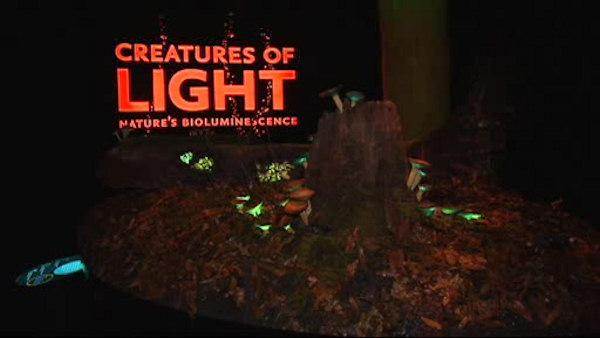 Creatures of Light exhibit