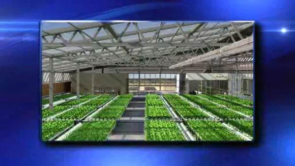 Brooklyn rooftop farm to grow produce
