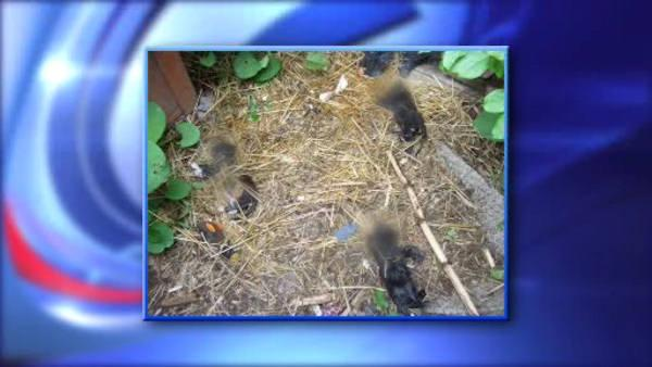 Authorities hunt for kitten killer in Suffolk County