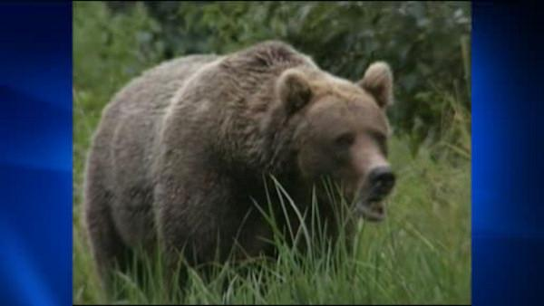 Wildlife officials still looking for bear that spared his victim
