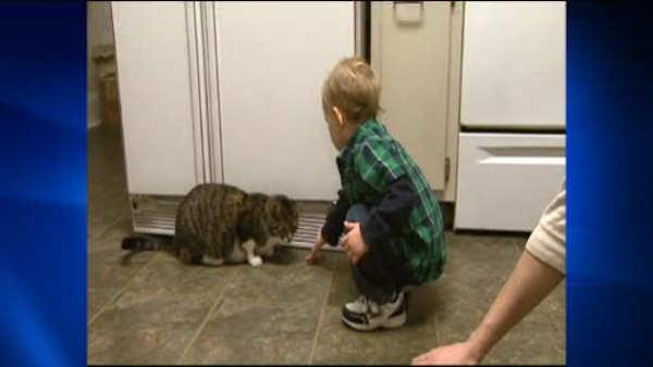 How pets can improve your child's health