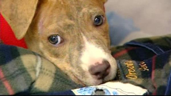 $2,000 reward offered after puppy tossed from car