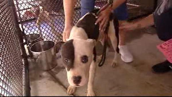 2 dozen dogs seized in animal cruelty case