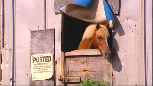 Horse housed in 'unsafe' stable according to State Senator