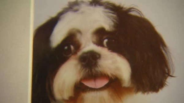 Manhattan woman says her dog was stolen