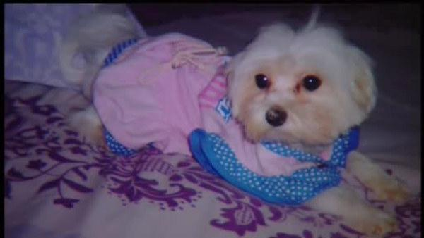 Dog disappears after being dropped off at the groomer's