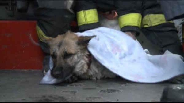 Dog rescued from frozen pond in Missouri
