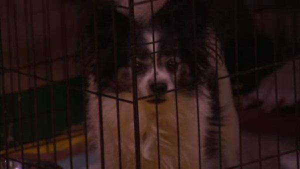 Foster homes needed for Sandy pet victims