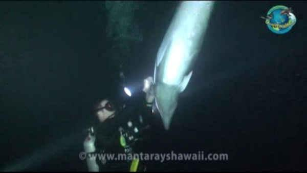 Cameras rolling as divers free tangled dolphin