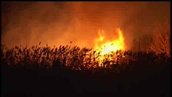 2 bodies found after brush fire