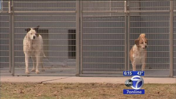 Closing animal shelter seeks new homes for its pets