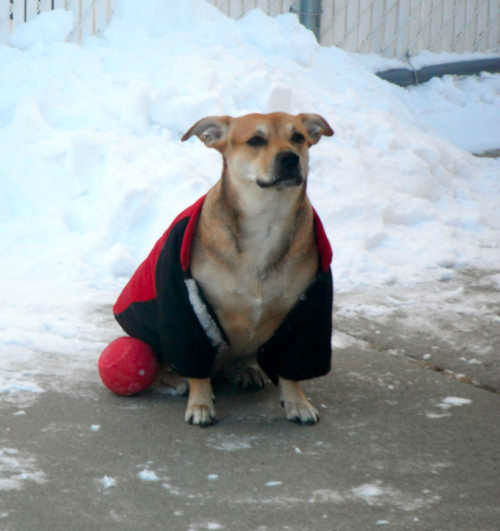 "<div class=""meta ""><span class=""caption-text "">Mia the dog plays in the snow. </span></div>"