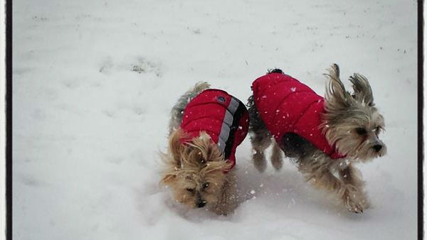 Daisy and Lily playing in the snow