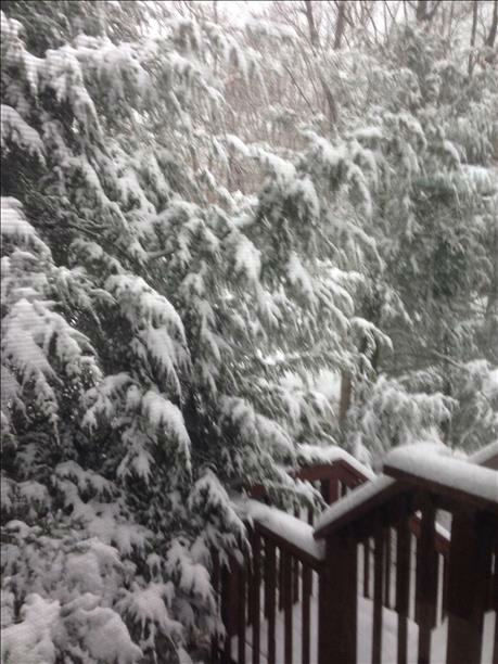 Snow in Sparta, NJ on February 3, 2014. <span class=meta>(WABC Photo)</span>