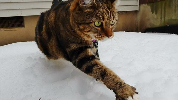 "<div class=""meta ""><span class=""caption-text "">Pepper walking carefully through the hard snow </span></div>"
