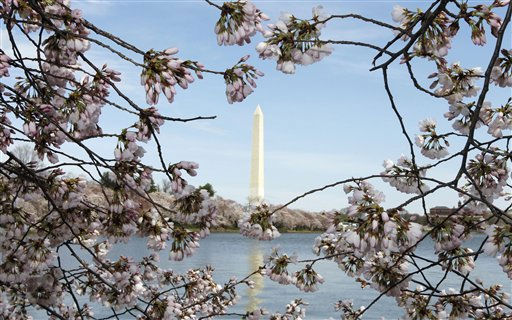 "<div class=""meta image-caption""><div class=""origin-logo origin-image ""><span></span></div><span class=""caption-text"">The Washington Monument is seen through the cherry blossoms in Washington, Friday, March 25, 2011. Peak blooming period for 2011 is predicted to be from March 29 through April 1 according to the National Park Service.(AP Photo/Alex Brandon) (AP Photo/ Alex Brandon)</span></div>"