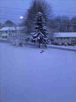 Donna in Carmel, NY sent in this photo of her front yard looking more like Christmas time than Spring time.