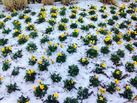 Perrin in Hoboken shows that the flowers may have been planted, but they are getting a little bit of an April chill after a dusting of snow hit our area.