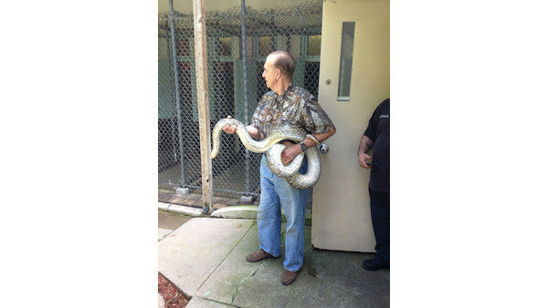 "<div class=""meta ""><span class=""caption-text "">A 12-foot python was found near a Burger King in Paterson, New Jersey on Tuesday morning. (WABC Photo/ Paterson Animal Control)</span></div>"