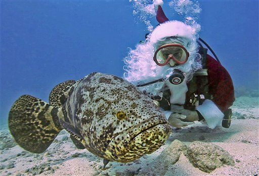 In this Dec. 17, 2010, photo released by the Florida Keys News Bureau, Spencer Slate, dressed as Santa Claus, watches a goliath grouper in the Florida Keys National Marine Sanctuary off Key Largo, Fla. Slate, the owner of a local dive shop, has been donning the St. Nick costume for years as part of a fundraiser for a local children&#39;s charity. &#40;AP Photo&#47;Florida Keys News Bureau, Bob Care&#41; NO SALES <span class=meta>(AP Photo&#47; Bob Care)</span>