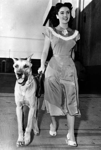 Actress Elizabeth Taylor, holding her dog...
