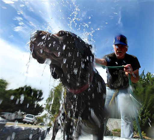 Charlie, a Labrador Retriever, get&#39;s a cooling shower from his owner, George Dudley, in from of their Mar Vista, Calif. home, Tuesday, Sept. 28, 2010. The fall heat wave pushed temperatures well over 100 degrees from Anaheim, home of Disneyland, to San Luis Obispo, Santa Cruz and Salinas on the usually balmy Central Coast. Many records were set or tied.  <span class=meta>(AP Photo&#47; Spencer Weiner)</span>