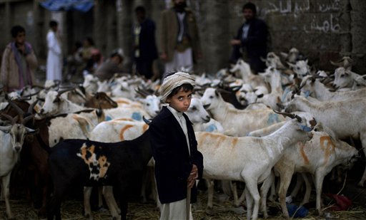 "<div class=""meta ""><span class=""caption-text "">Yemeni Hussein Al-Amji, 10, looks on while standing next to his father's livestock displayed for sale at a market ahead of the Muslim holiday of Eid al-Adha, or Feast of the Sacrifice, in San'a, Yemen, Friday, Nov. 12, 2010. (AP Photo/Muhammed Muheisen) (AP Photo/ Muhammed Muheisen)</span></div>"