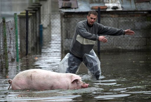 A local villager evacuates a pig from a household in Banja Koviljaca, 120 kilometers south-west of Belgrade, Serbia, Saturday, Dec. 4, 2010. Bosnia, Serbia and Montenegro have declared flood emergencies after heavy rain pushed the River Drina to its highest level in 100 years. &#40;AP Photo&#47;Vladimir Milovanovic&#41; <span class=meta>(AP Photo&#47; Vladimir Milovanovic)</span>