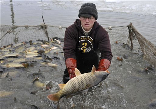 A Hungarian fisherman catches fish from a net in  Reti Major in central Hungary, Wednesday, Dec. 22, 2010. Although the country is rich in waterways, traditionally most Hungarians eat fish only at Christmas time. &#40;AP Photo&#47;Bela Szandelszky&#41; <span class=meta>(AP Photo&#47; Bela Szandelszky)</span>
