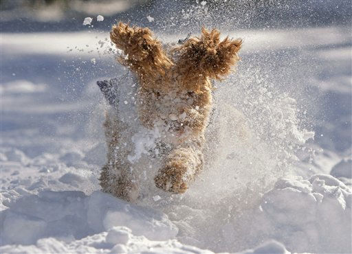 "<div class=""meta image-caption""><div class=""origin-logo origin-image ""><span></span></div><span class=""caption-text"">Maya, an Australian Labradoodle, bounds through the snow in Cranbury, N.J.  Monday after more than 20 inches of snow fell in the area.  (AP Photo/Jim Gerberich) (AP Photo/ Jim Gerberich)</span></div>"