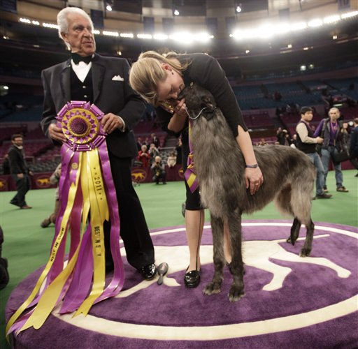 Scottish deerhound Hickory poses for photographs with his handler, Angela Lloyd, right, and judge Paolo Dondina after Hickory won best in show during the 135th Westminster Kennel Club Dog Show, Tuesday, Feb. 15, 2011, at Madison Square Garden in New York. (AP Photo/Mary Altaffer)