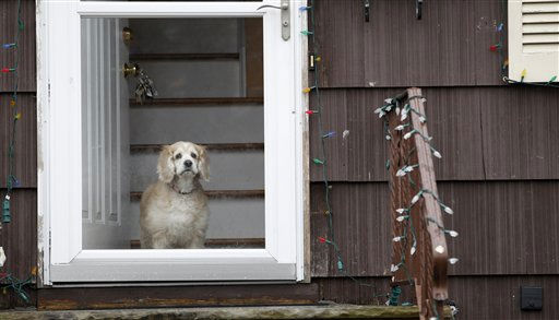 A dog looks out the window on a home during a wet day caused by a rain storm, Thursday, March 10, 2011, in Fairfield, N.J. &#40;AP Photo&#47;Julio Cortez&#41; <span class=meta>(AP Photo&#47; Julio Cortez)</span>