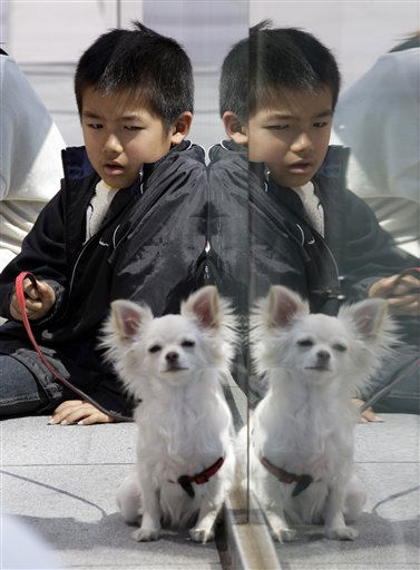 "<div class=""meta ""><span class=""caption-text "">Kenshin Nakajima, 7, evacuated from Minamisoma, Fukushima Prefecture, northeastern Japan, where the troubled Fukushima Dai-ichi nuclear power plant is located, takes time with his dog at an evacuation center in Saitama, near Tokyo, Monday, March 28, 2011. The March 11 earthquake off Japan's northeast coast triggered a tsunami that barreled onshore and disabled the Fukushima nuclear plant. (AP Photo/Lee Jin-man) (AP Photo/ Lee Jin-man)</span></div>"