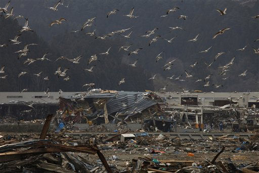 Seagull fly over debris near the March 11 earthquake and tsunami-destroyed area of Rikuzentakata, Iwate Prefecture, northern Japan, Wednesday, March 30, 2011. &#40;AP Photo&#47;Vincent Yu&#41; <span class=meta>(AP Photo&#47; Vincent Yu)</span>