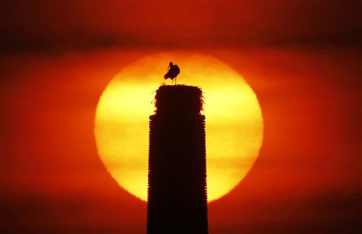 A male stork prepares the nest on the chimney of an old distillery as he waits for his partner to arrive at sunrise in Nauen-Ribbeck near Berlin, Germany, Tuesday, April 5, 2011. The male storks arrive some days earlier to the summer quarter than their partner to prepare the nest for raising their chicks in the marsh area that is rich in food for them.  &#40;AP Photo&#47;Ferdinand Ostrop&#41; <span class=meta>(AP Photo&#47; Ferdinand Ostrop)</span>