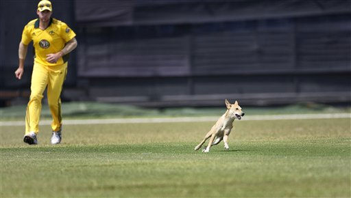 Australian cricketer John Hastings chases a dog that strayed into the field during a warm-up cricket match against Bangladesh Cricket Board XI at Fatullah, on the outskirts of  Dhaka, Bangladesh, Thursday, April 7, 2011. Australia will play three one-day Internationals against Bangladesh beginning April 9. &#40;AP Photo&#47;Pavel Rahman&#41; <span class=meta>(AP Photo&#47; Pavel Rahman)</span>