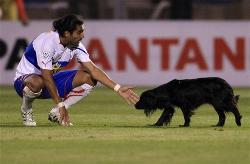 Chile&#39;s Universidad Catolica&#39;s Juan Eduardo Eluchans tries to catch a dog during a Copa Libertadores soccer match against Argentina&#39;s Velez Sarsfield in Santiago, Chile, Thursday, April 7, 2011. &#40;AP Photo&#47;Roberto Candia&#41; <span class=meta>(AP Photo&#47; Roberto Candia)</span>