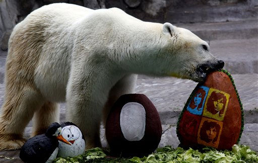 A polar bear breaks a decorated Easter eggs with food inside at the zoo in Buenos Aires, Argentina, Thursday, April 21, 2011. &#40;AP Photo&#47;Natacha Pisarenko&#41; <span class=meta>(AP Photo&#47; Natacha Pisarenko)</span>